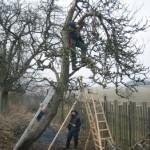 Obstbaumschnitt 1