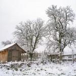 winterpause11