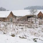 winterpause5